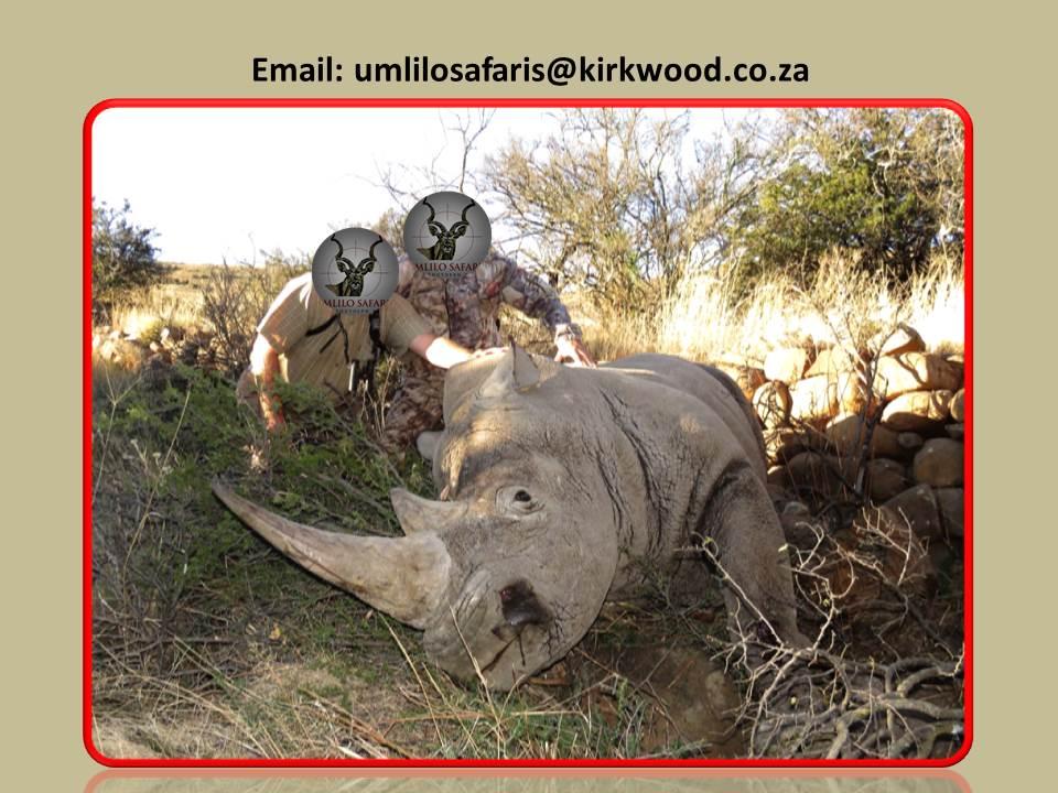 Rhino Green Hunt 1.jpg