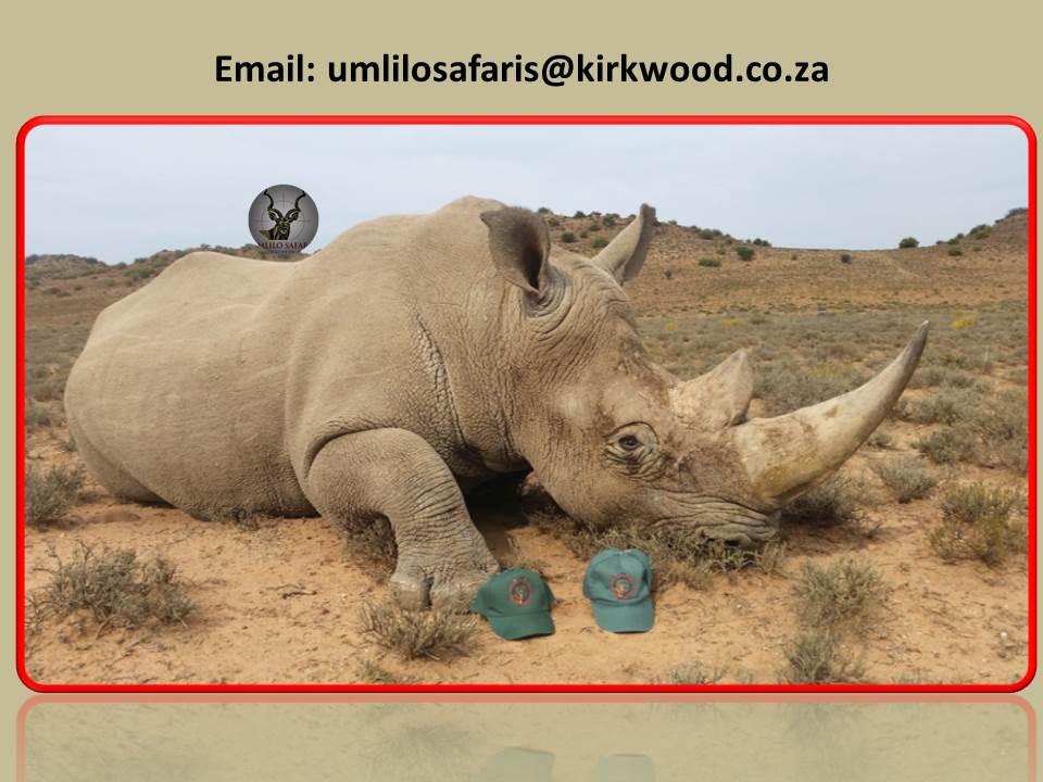 Rhino Green Hunt 5.jpg