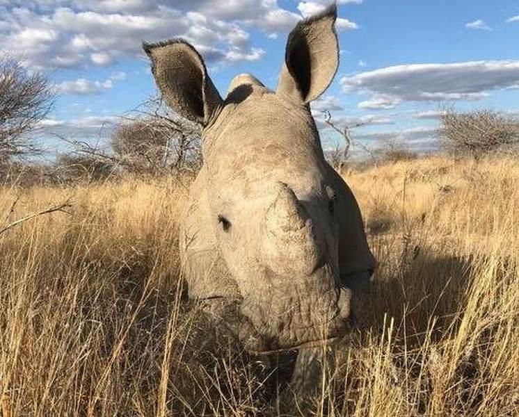 rhino-orphan-trusty.jpg