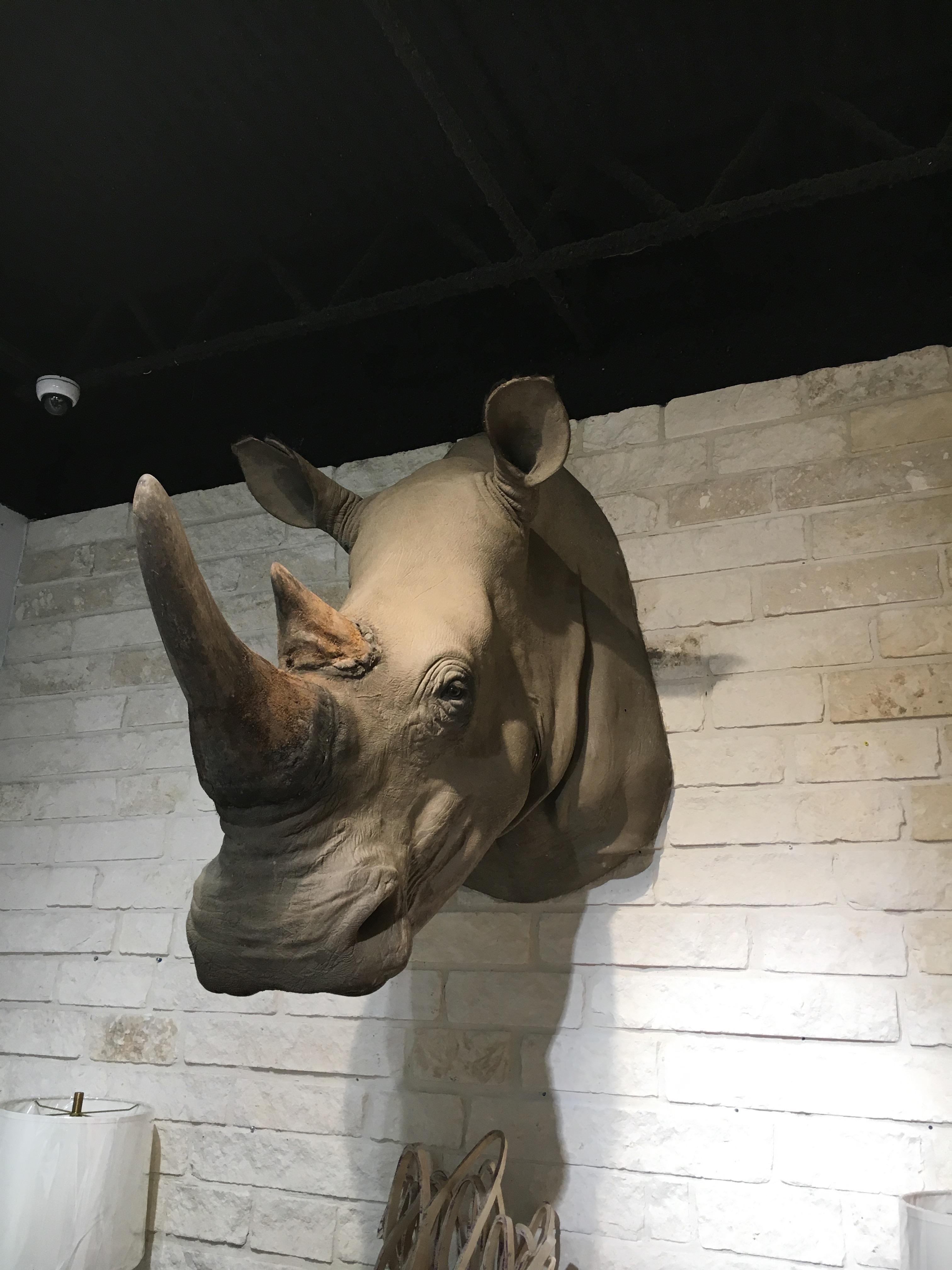 rhino wall.jpg