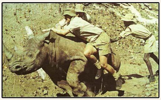 rhinocapture.jpg