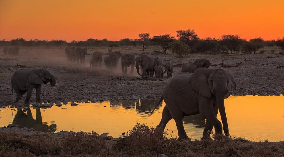 safari-by-night-elephant-at-etosha-park.jpg