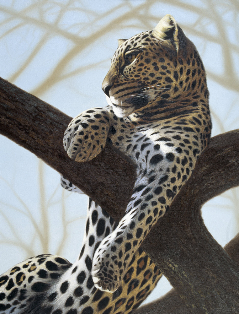 samburu-leopard-oil-on-canvas-24x30.jpg