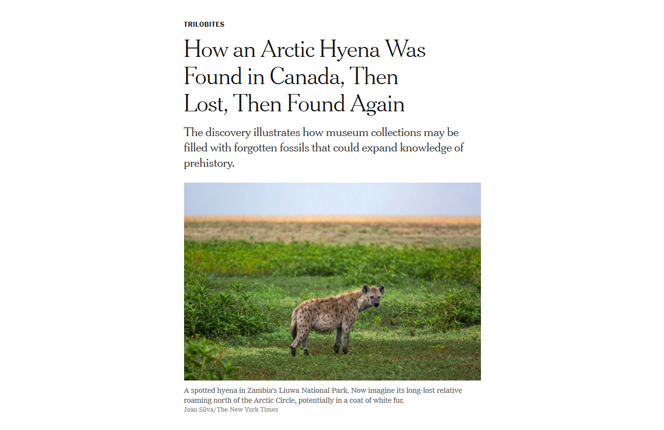 Screenshot_2019-06-20 How an Arctic Hyena Was Found in Canada, Then Lost, Then Found Again.png
