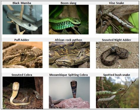 shakati-snakes.jpg