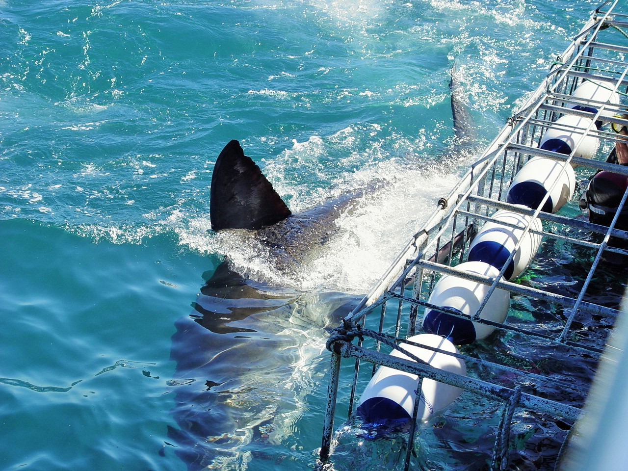 shark dive 2.jpg