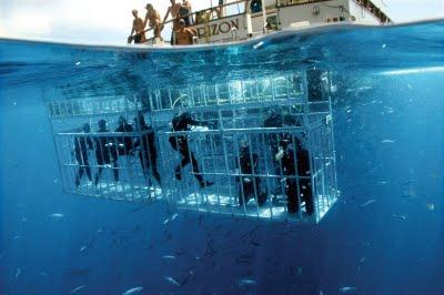 shark-diver-cages.jpg