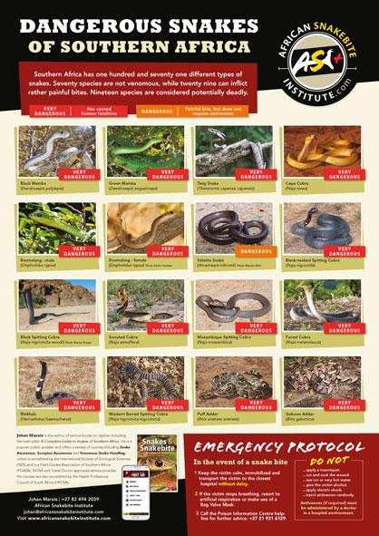 Snake Poster 8x11.jpg
