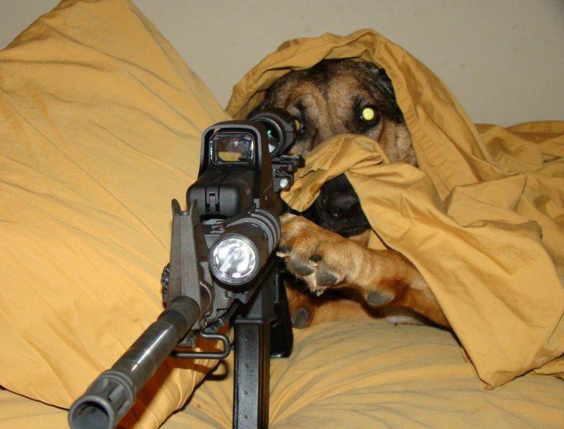 sniper-dog-bed-hiding-rifle-13077584826.jpg