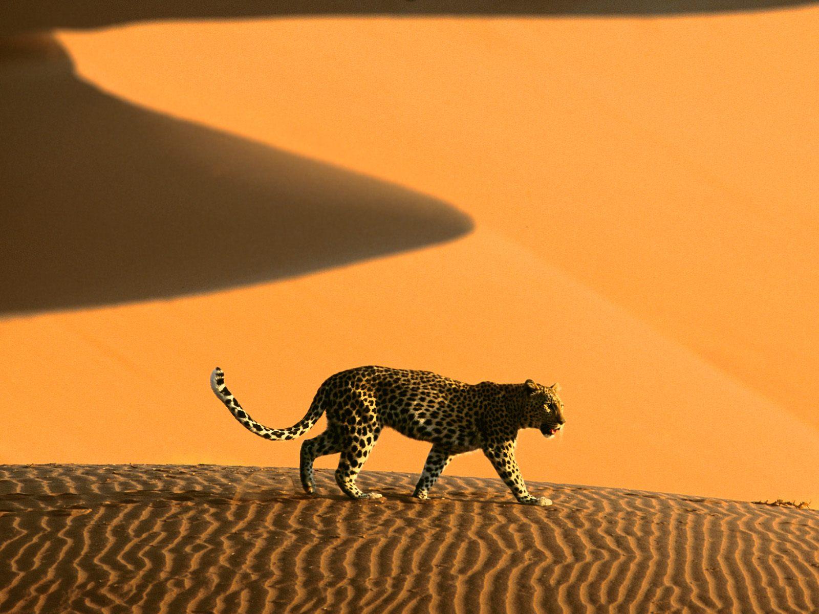 Sossusvlei_Namib_Desert_Namibia6.jpg