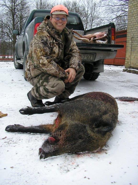 Swedish wild boar.jpg