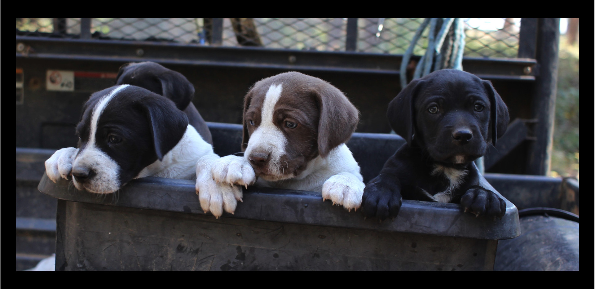 three pups 2.jpg