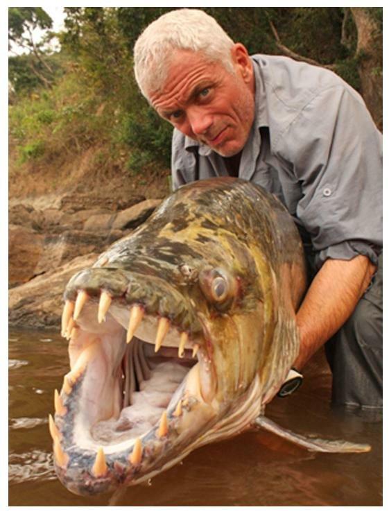 Tigerfish-and-Angler-Jeremy-Wade.jpg