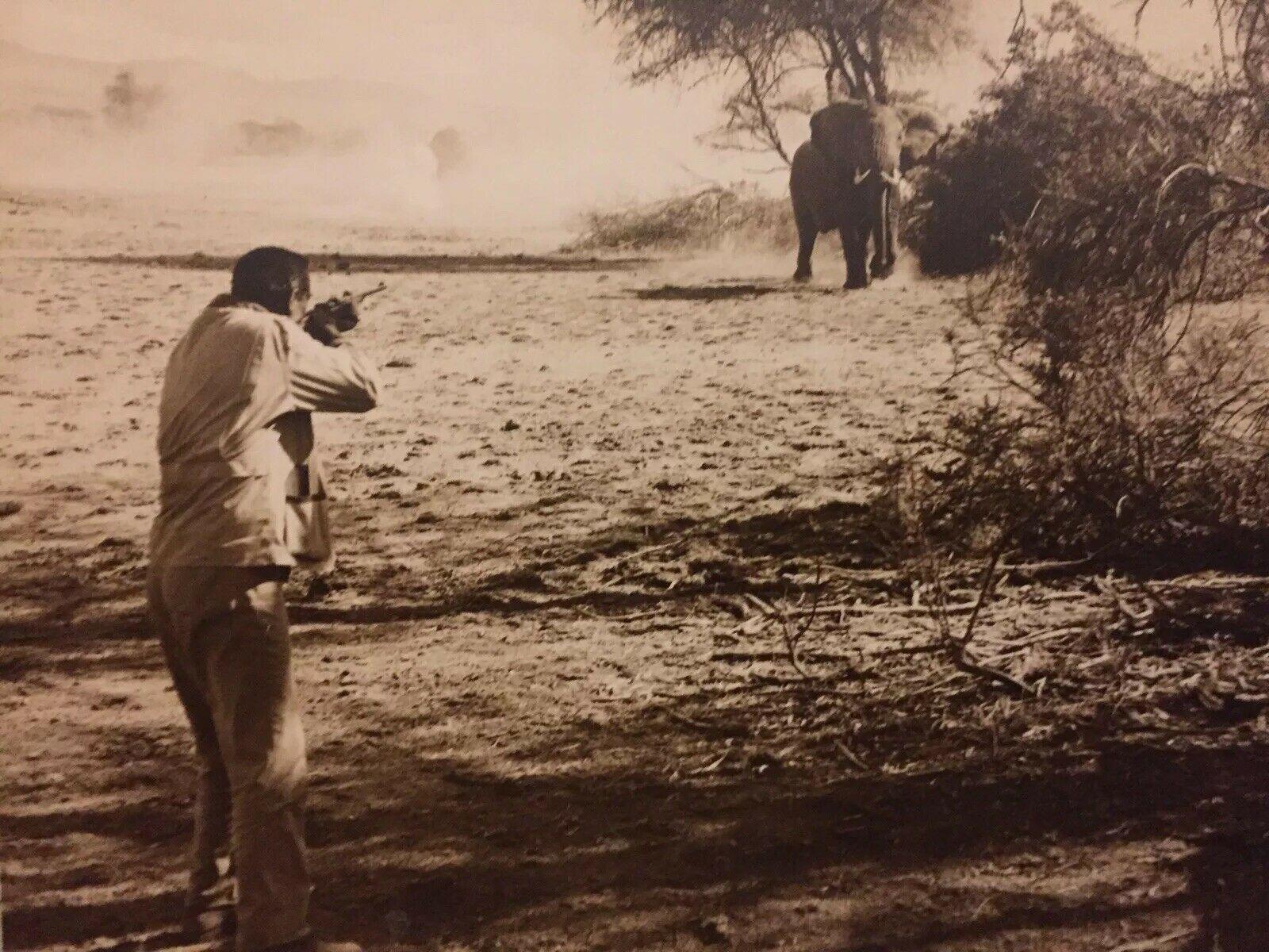 wayne_hatari-elephant.jpg