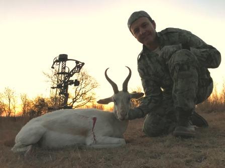 White Springbok.JPG