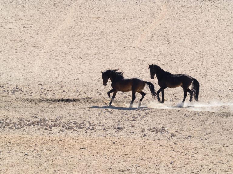Wild-horses-near-Wwdns-768x576.jpg