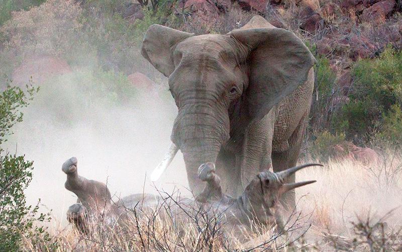Wildlife-Africa.jpg