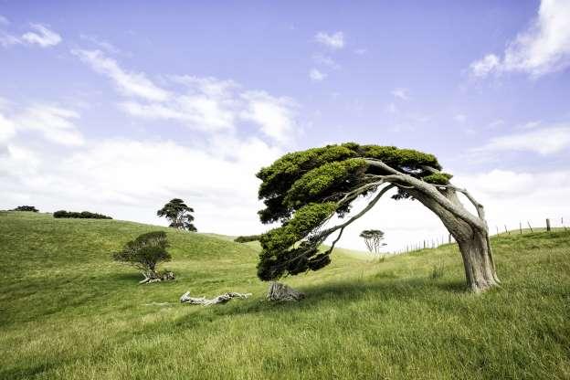 Windswept trees.jpg
