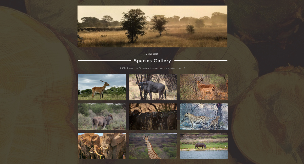 zana-bote-safaris-03.jpg
