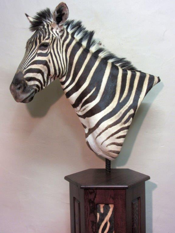Zebra(1).jpg