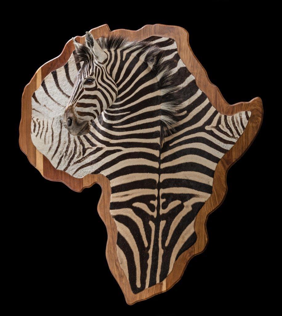 Zebra-3D-HH030.jpg