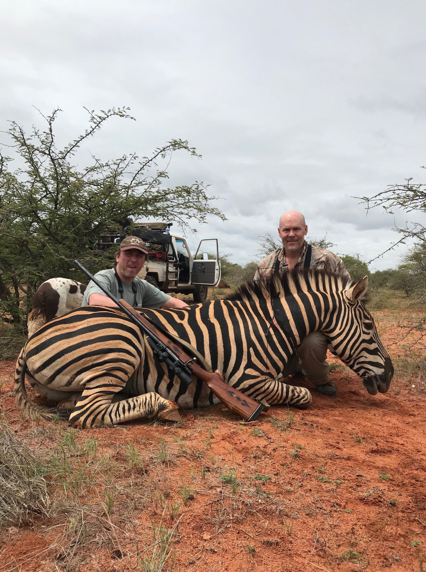 zebra bogdan.jpeg