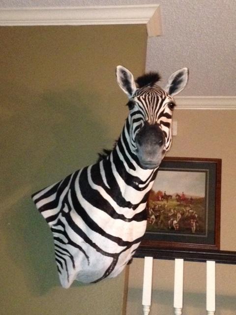 zebra full.jpg