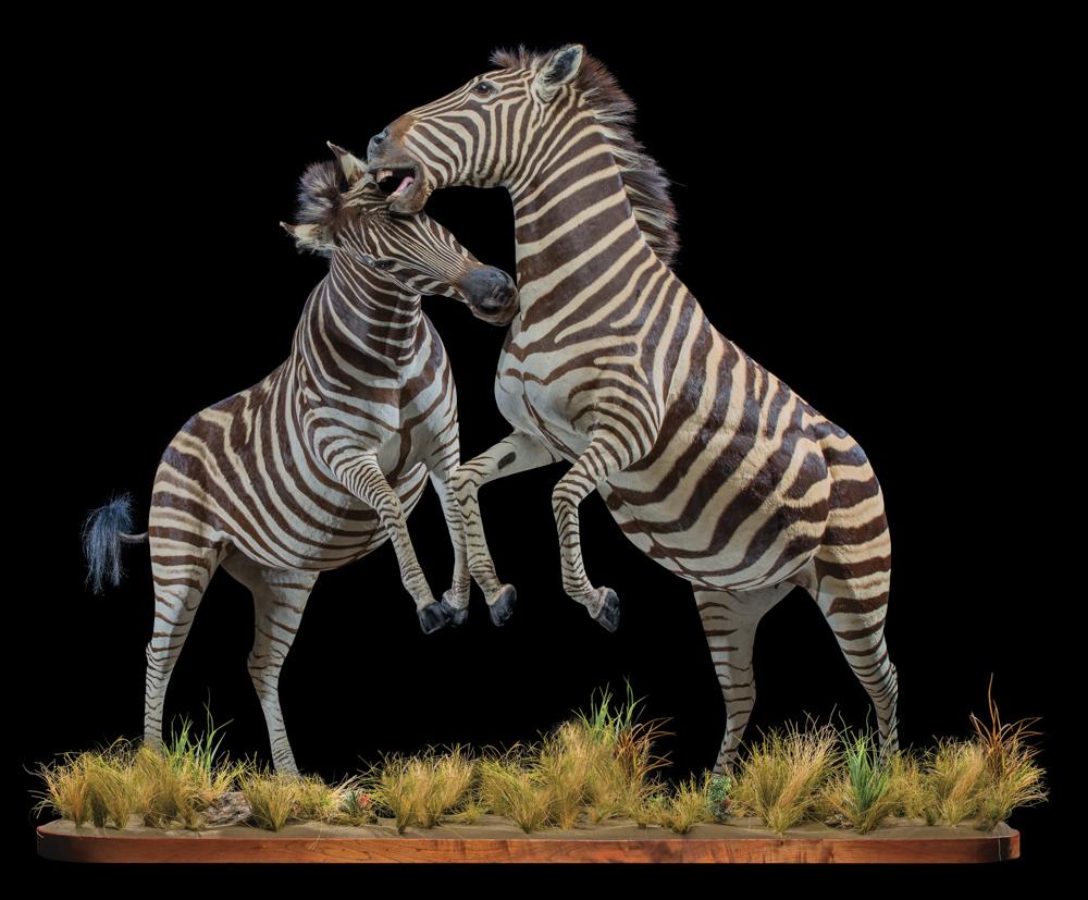 Zebra-fullmount-combi-FF009.JPG