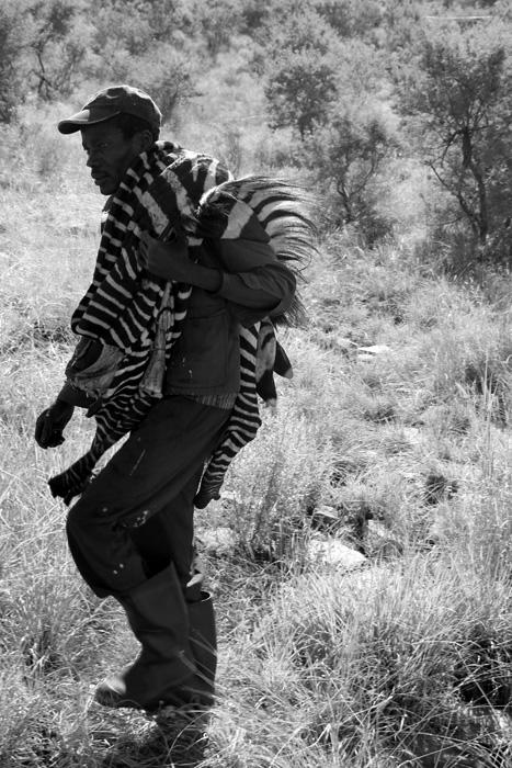 Zebra-Hunt01.jpg
