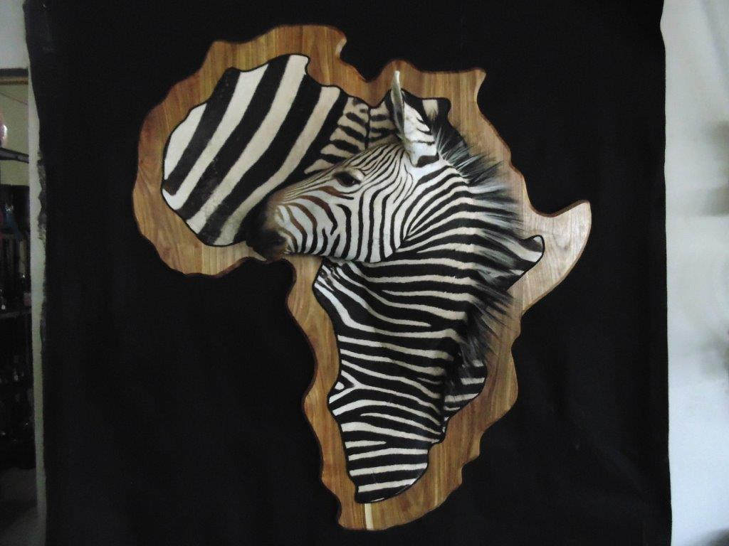 unique zebra mount king u0027s taxidermy namibia hunting
