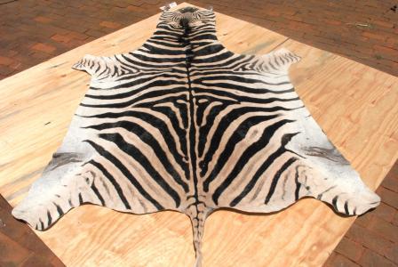 zebra rug.JPG