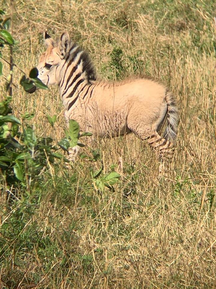 Zebra_1.jpg