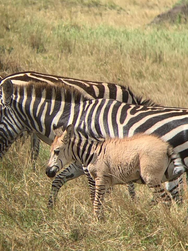 Zebra_2.jpg