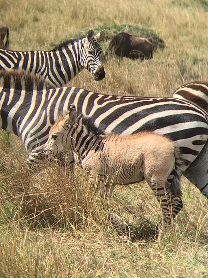 Zebra_5.jpg