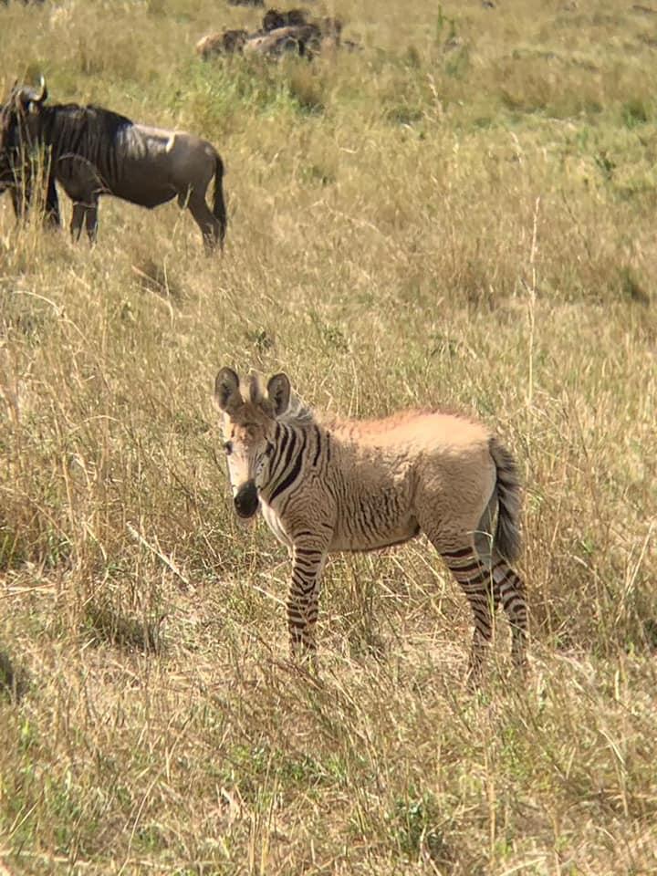 Zebra_6.jpg