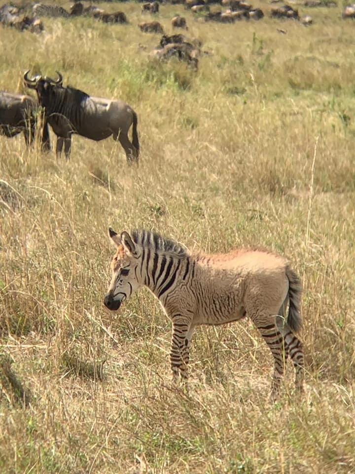 Zebra_8.jpg