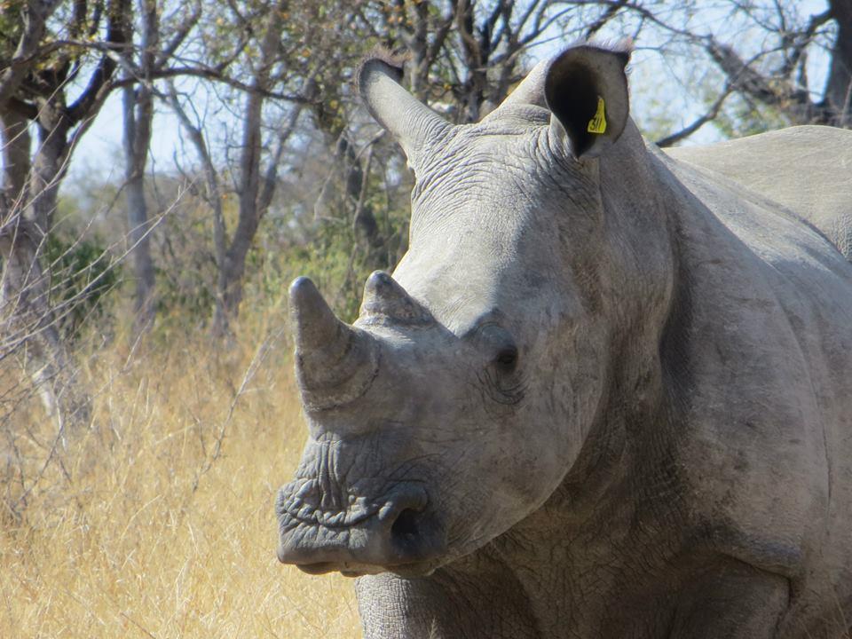 Zim Rhino 1.jpg