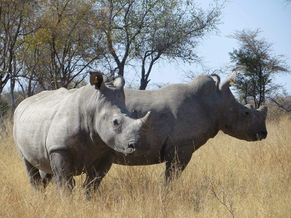 Zim Rhino 2.jpg
