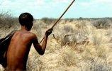 Persistence hunting, where a Kalahari Bushman is preparing to spear a Kudu bull he chased for ma.jpg