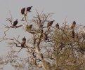 vultures (1280x1060).jpg