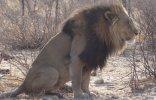 Botswana Lion  (1280x823).jpg