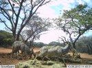 LBG Safaris (7).jpg