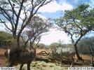 LBG Safaris (8).jpg