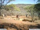 LBG Safaris (11).jpg