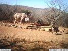 LBG Safaris (17).jpg