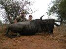 Wildebeest (600 x 450).jpg