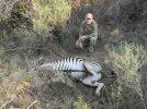 Zebra hole.jpg
