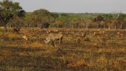 Roan plains.jpg