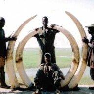 McDonald Safaris