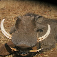 Courteney Selous Safaris
